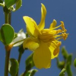 latr flower